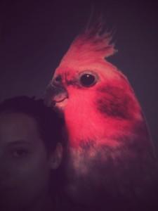 Un pappagallo by ChiaraFrida ©